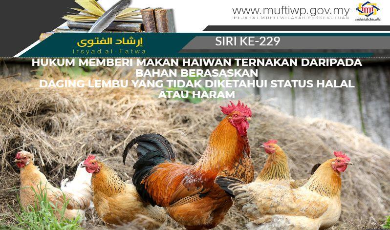940 Koleksi Gambar Binatang Ternak Ayam Gratis Terbaru