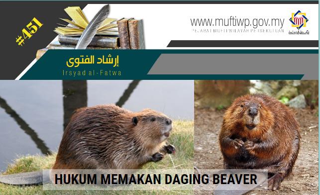 IF 451 beaver