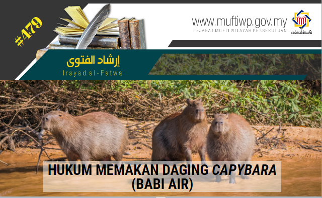 IF 479 capybara