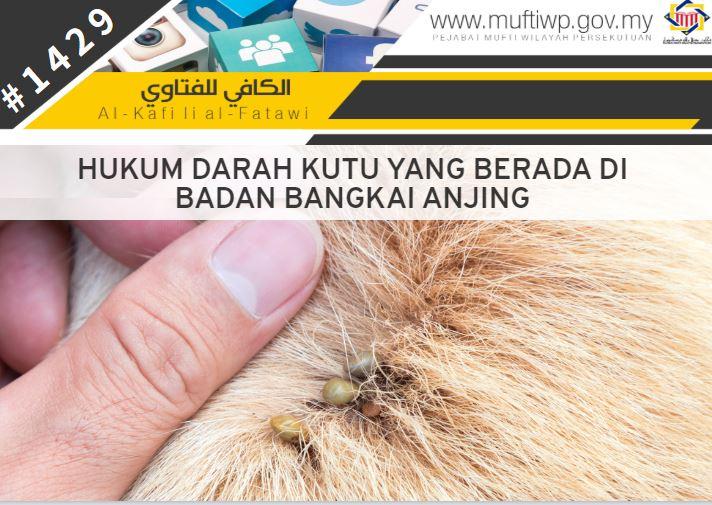 Pejabat Mufti Wilayah Persekutuan Al Kafi 1429 Hukum Darah Kutu Yang Berada Di Badan Bangkai Anjing